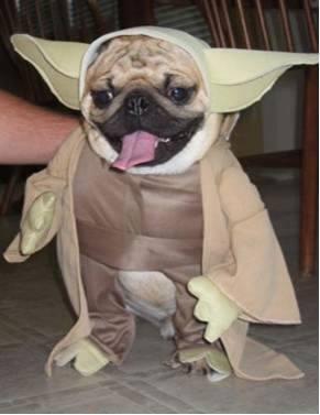 pug-costumes-055