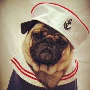pug-costumes-056
