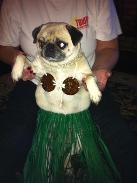 pug-costumes-059