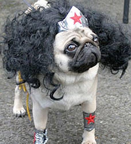 pug-costumes-062