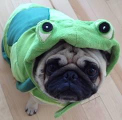pug-costumes-065