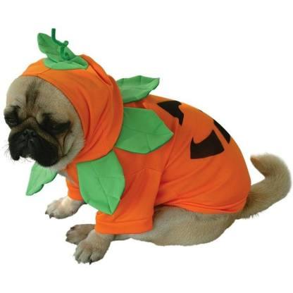pug-costumes-066
