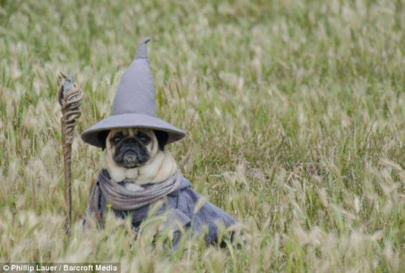pug-costumes-070