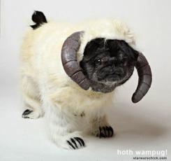 pug-costumes-071
