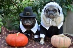 pug-costumes-072