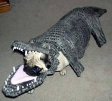 pug-costumes-074