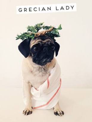pug-costumes-076