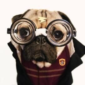 pug-costumes-081