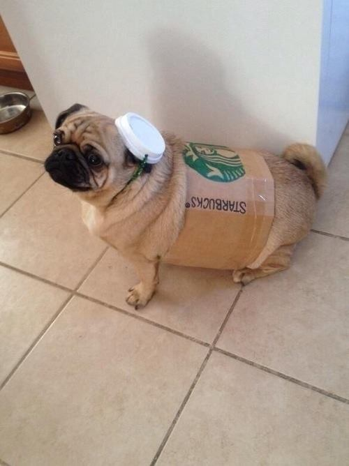 pug-costumes-083