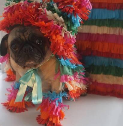 pug-costumes-085