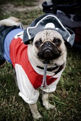 pug-costumes-086