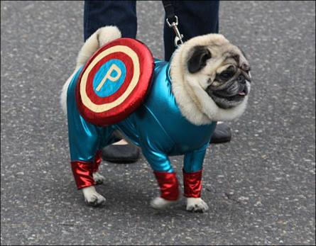 pug-costumes-089