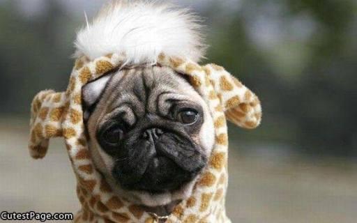 pug-costumes-096