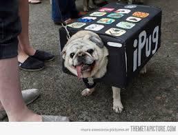 pug-costumes-098