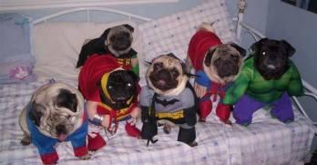 pug-costumes-102